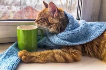 Кошачий грипп как собирательный термин