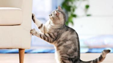 Почему кошки царапают мебель или обои