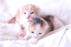 котята: развитие и воспитание