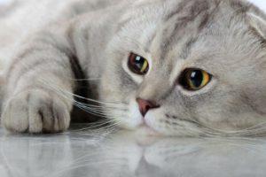 кошка не пьет: риск обезвоживания