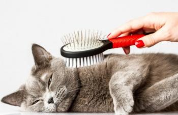 Советы по уходу за кошками во время линьки