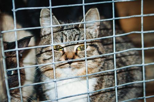Торговля кошачьим мясом во Вьетнаме процветает
