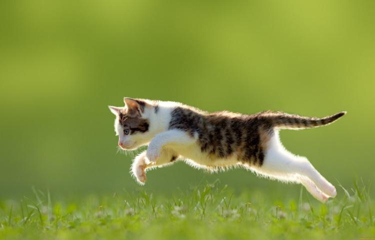 Кошки и их кости: анатомически точные тела