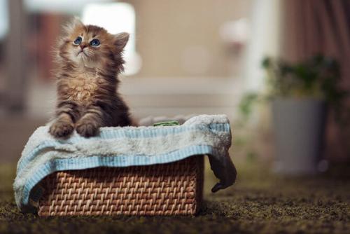 Вы решили обрести котенка?