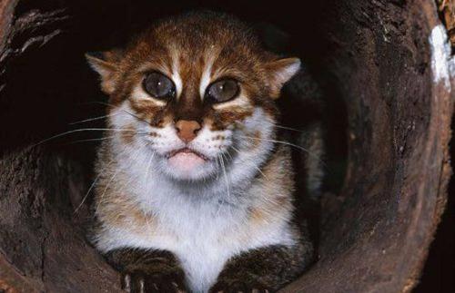 Виды кошачьих: их рекорды