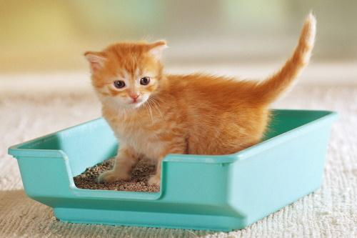 Выбор туалетного лотка для кошки