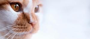Могут ли кошки видеть в темноте