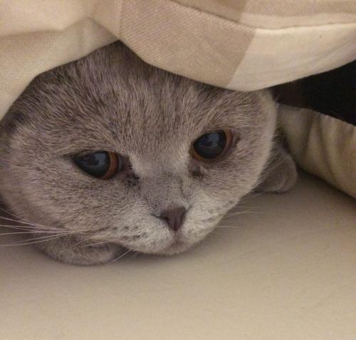 Ошибки в воспитании кошки