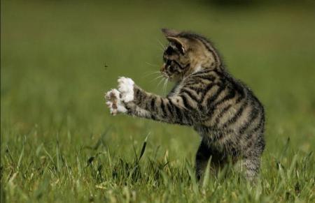 Кошку укусила оса: что делать
