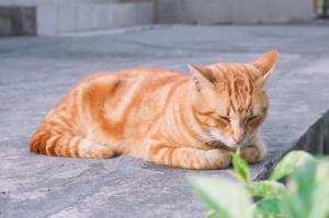 Позы сна у кошек:  что они означают